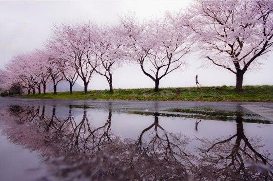 Rain-of-spring